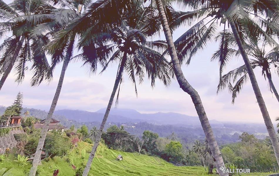 Bukit Jambul Rice Terraces