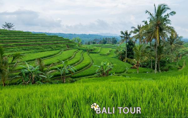 bali half day tours