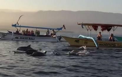 Lovina Dolphins Watching Tour
