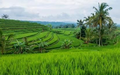 Jatiluwih Rice Terraces Tour