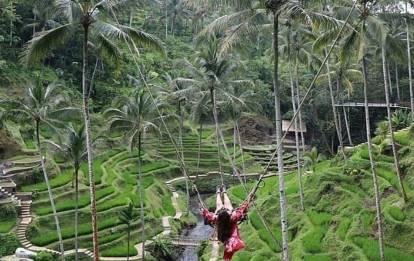 Kintamani - Tegalalang Rice Terraces BaliTour
